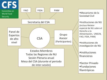 Organigrama MSC