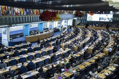 CFS Plenary  - FAO Copyright