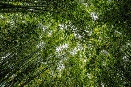 bamboo-1224039_1920