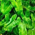 green-2983254_1920