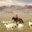 mongolia-419875_1920