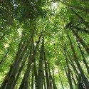 bamboo-566450_1920