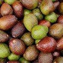 avocados-3399809_1920