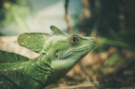 lizard-1935081_1920