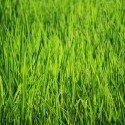 bakground-green-2466735_1920