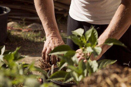 garden-5315602_1920