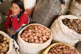 In the Andahuaylas food market, Peru. Traders sell potatoes, the main produce of the Andahuaylas region. They buy the potatoes from the local farmers, mainly at the Sunday Fair, and resell them. By peeling them they add value to their product.   IFAD's country strategy in Peru assists small-scale farmers and entrepreneurs with expanding upon their non-agricultural activities in addition to supporting local farmers establsih agriculture-related enterrpises in nearby small and medium-size towns.