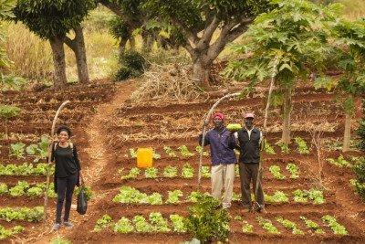 Quienes alimentan al mundo siguen luchando contra la Cumbre de la ONU dirigida por la agroindustria